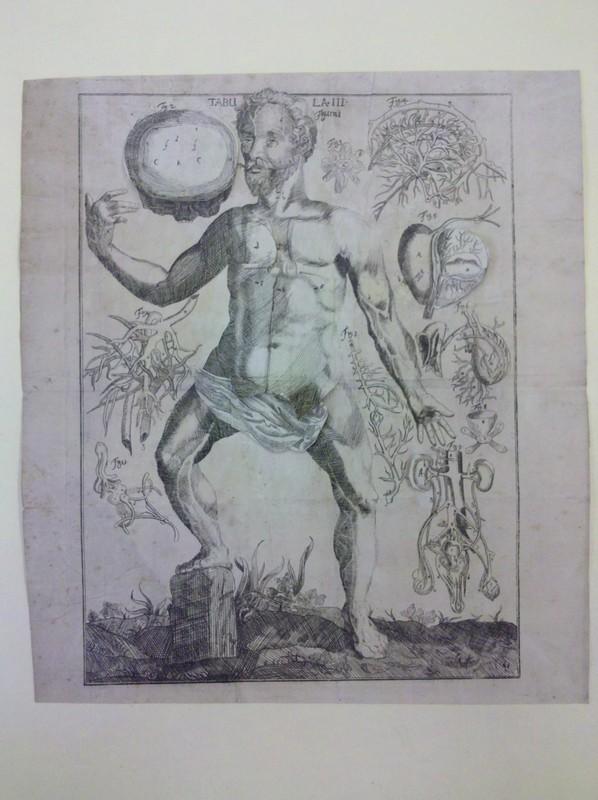 von Hellwig, Christoph. Nosce te ipsum, vel, Anatomicum vivum...(male), 1720.