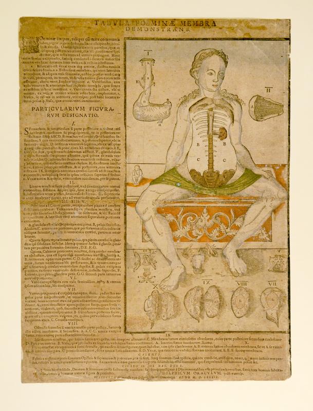 Simon Gronenberg, Tabula Foeminae Membra//Demonstrans, 1589