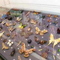 Insect exhibit specimens
