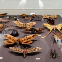 Insect exhibit specimen up close