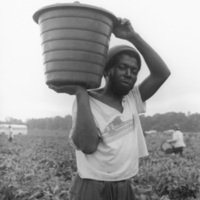 Picking bell peppers, Decatur County, GA, June 1984<br /> <br /> Paul Kwilecki Photographs and Papers<br /> gelatin silver print
