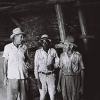Three tobacco workers in Pinar del Río Province, April 1964