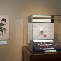 Insect exhibit brain