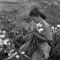 Martha Rangel harvesting onions near Mercedes. Ms. Rangel carries her immigration papers in her back pocket in case she has to show them to INS workers, TX, 1999.<br /> <br /> Indivisible: Stories of American Community<br /> Photograph byDanny Lyon<br /> gelatin silver print