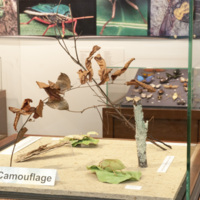 Insect exhibit camoflage