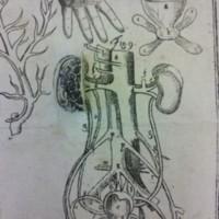 von Hellwig, Christoph. Nosce te ipsum, vel, Anatomicum vivum...(male-close up of kidney), 1720.