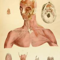 Edward Tuson, Myology, illustrated by plates, 1828.